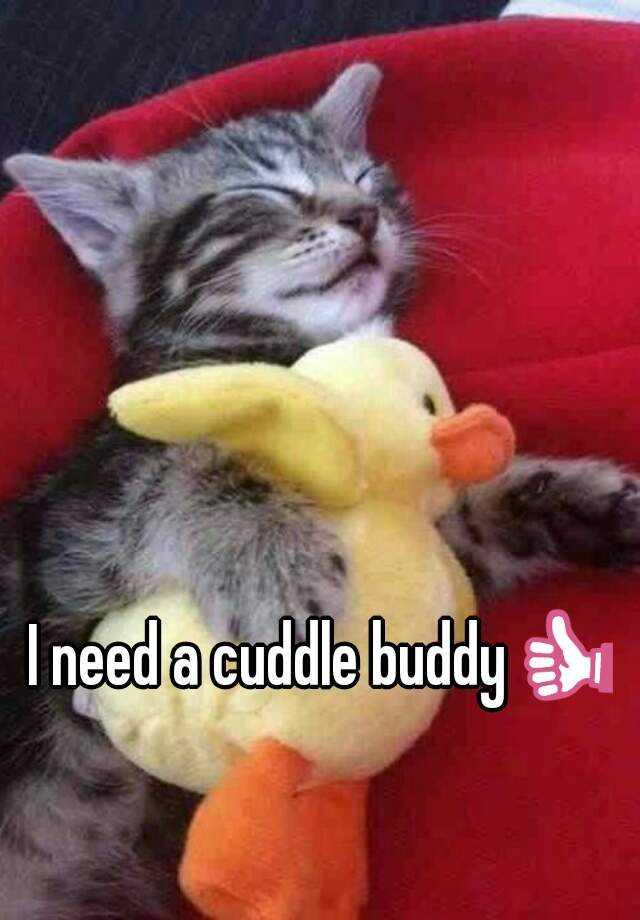 I need a cuddle buddy👍