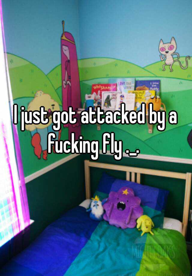 I just got attacked by a fucking fly ._.