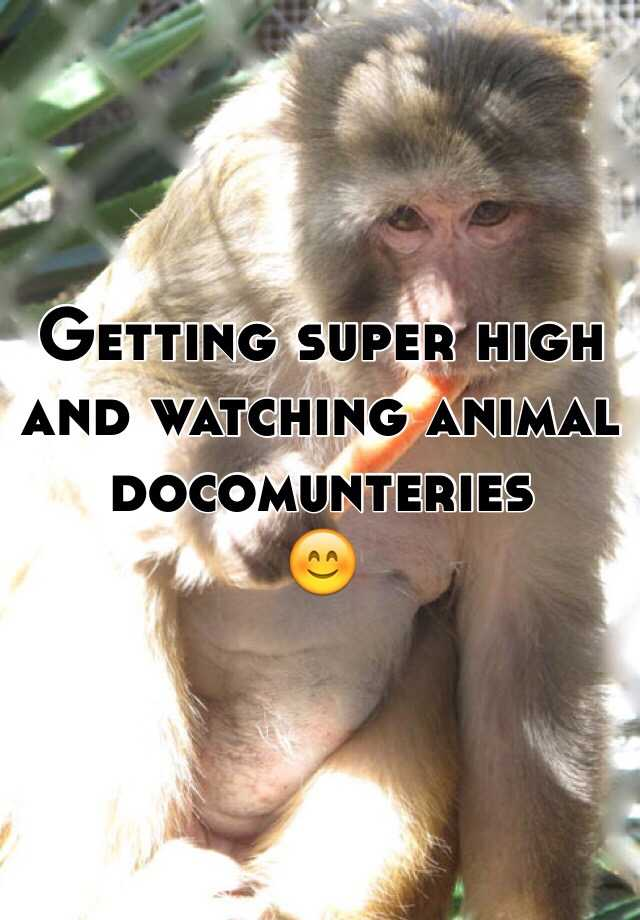 Getting super high and watching animal docomunteries 😊