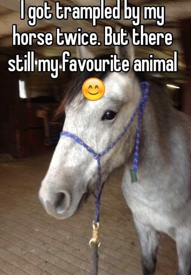 I got trampled by my horse twice. But there still my favourite animal 😊